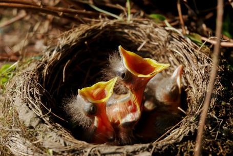 nest-3004595_960_720
